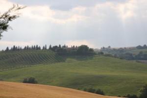 wijngaard4