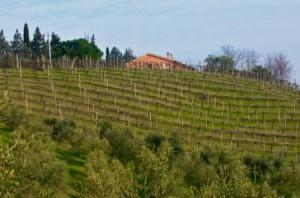 wijngaard_voorjaar_2010